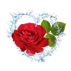 Blumen 343