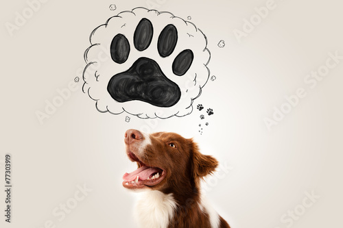 canvas print picture Cute border collie with paw above her head