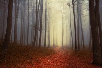 Trail in beautiful foggy forest