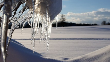 group of melting icicle losing water drops at a sunny winter day