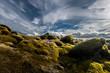 Moss and sky