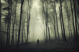 Fototapety haunted forest