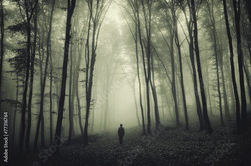 haunted forest - 77316764