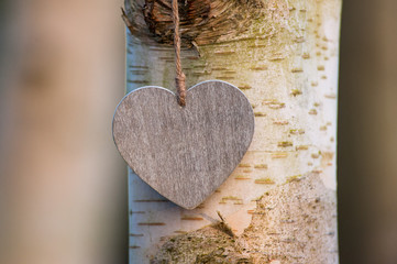 love heart  tree trunk background