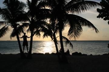 Zonsondergang bij palmbomen