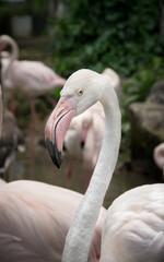 Flamingo ,nature and wildlife.