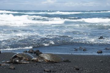 Turtle on Black Sand Beach, Hawaii