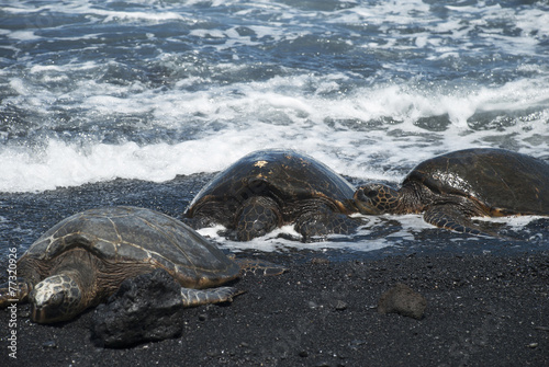 Papiers peints Tortue Turtles on Black Sand Beach, Hawaii
