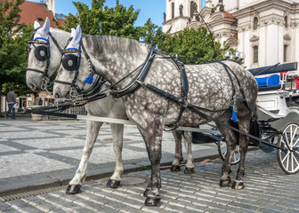Horse-drawn carriage on the streets of Prague.