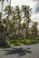 Palm trees swaying in wind on Punalu'u Beach, Hawaii