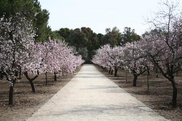 Paseo del Parque Quinta Los Molinos