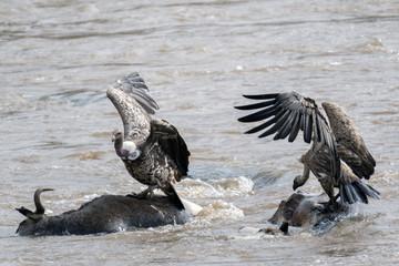 Vultures Feast