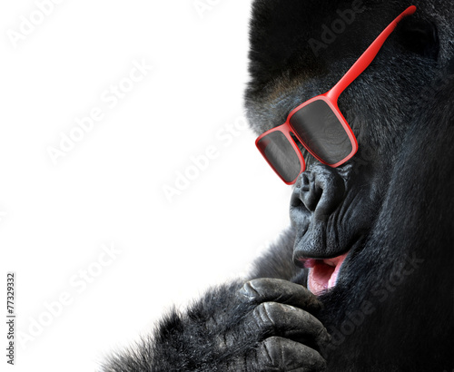 Foto op Plexiglas Aap Unusual animal fashion; gorilla face with red sunglasses