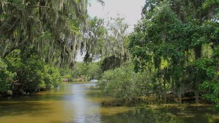 Bayou Swamp 2