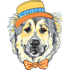 vector dog Caucasian Shepherd Dog breed in hat and bow tie
