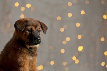 Cute puppy on Christmas lights background