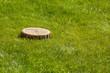 tree stump on the grass - 77336576