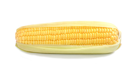 Corn with white background