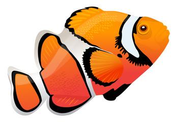 vector illustration of a clown fish