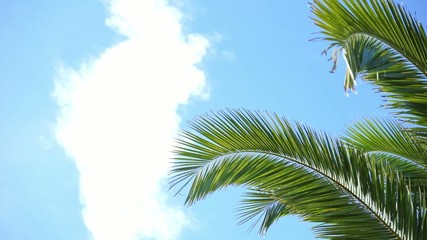 blue and cloudy sky with waving palm leaves