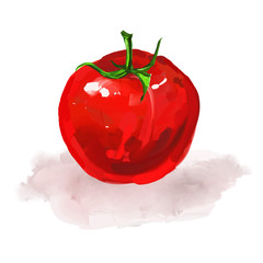tomato Vector illustration  hand drawn  painted watercolor