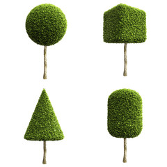 Green decorative shrubs or trees of different shapes