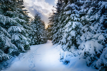 winterlicher Waldpfad
