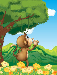 A monkey at the jungle