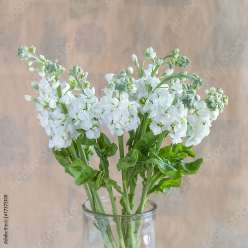 Papiers peints Muguet de mai Lily of the valley