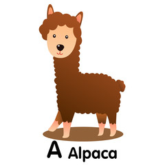 Illustrator of alphabet letter A alpaca