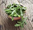Arugula  herb.
