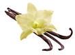 Bunch of vanilla sticks and orchid flower on white background. F