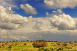 Parco Nazionale Alta Murgia:paesaggio primaverile.ITALIA(Puglia)