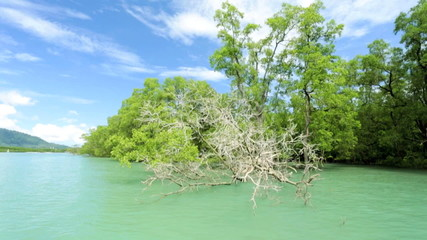Forests of Mangrove trees, Thailand, Southeast Asia