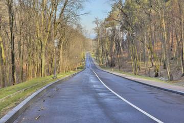 Красивая дорога в лесу