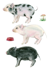 watercolor three little pigs