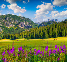 Pasture for horses in National Park Tre Cime di Lavaredo