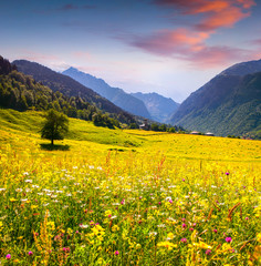 Colorful summer landscape in the Caucasus mountains