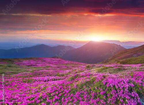 Fototapeta Colorful summer sunrise in the Carpathian mountains
