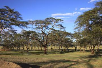 Parco lago Nakuru,Kenya.