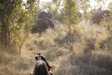 Woman photographing a herd of elephants