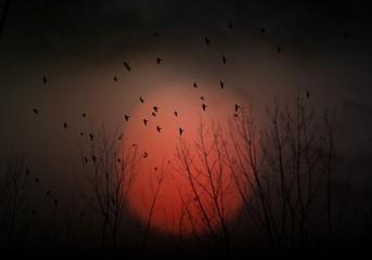 Spain, Madrid, Silhouette of birds