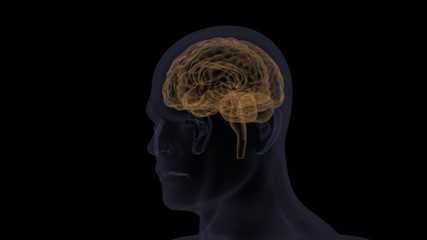 Computer animation of a human brain scan turn around