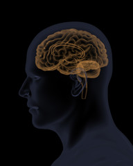 Profile view of man and his brain