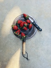 Studio shot of strawberries