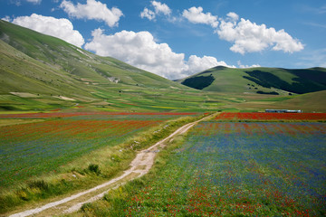 Italy, Umbria, Monti Sibillini National Park, Trail among colors