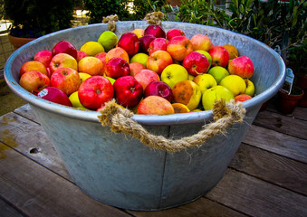 USA, California, Sonoma County, Tubful of apples on wooden table