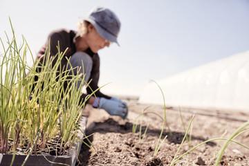 USA, Colorado, Mesa, Palisade, Woman planting seedlings on farm