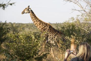 Woman photographing a giraffe