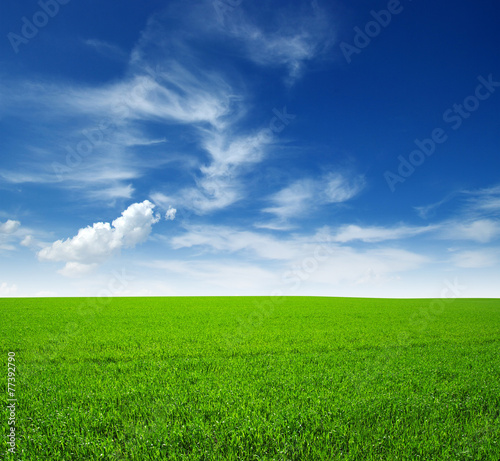 canvas print picture field